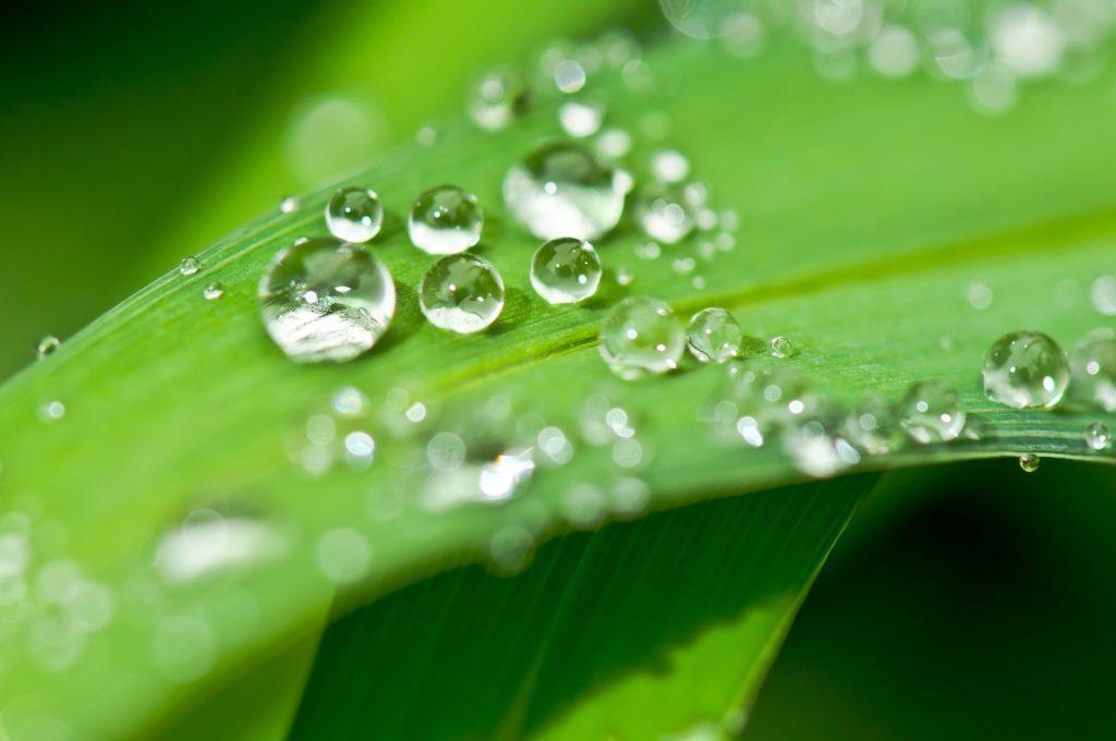 葉っぱが水を弾いている写真